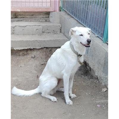MONSERRATO - Cane - Microchip 380260043395533