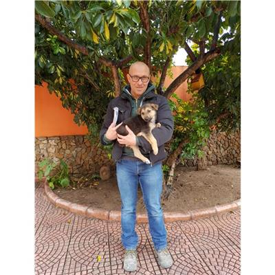 SAN SPERATE - Cane - Microchip 380260043393169