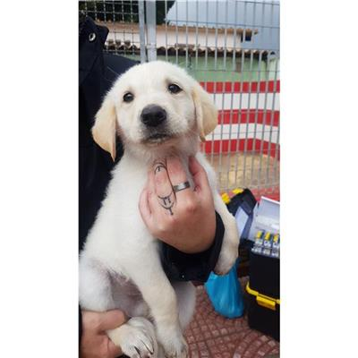 MONSERRATO - Cane - Microchip 380260044334961